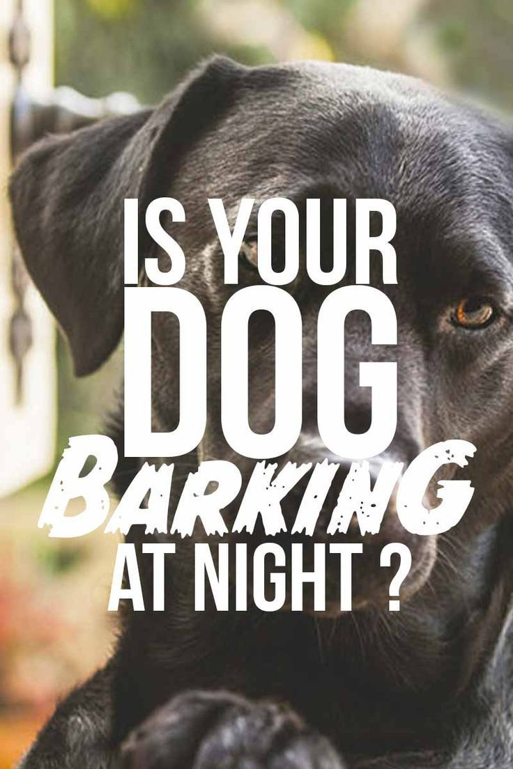 Is Your Dog Barking At Night Help Your Dog Sleep And Prevent Early Waking Dog Barking At Night Dog Barking Training Your Dog