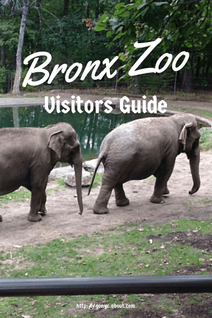 Tips, advice and basic information for visiting the Bronx Zoo.