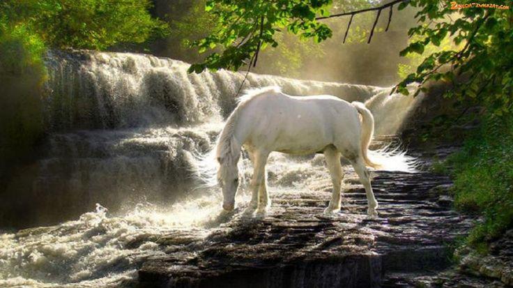 dzikie konie mustangi - Szukaj w Google