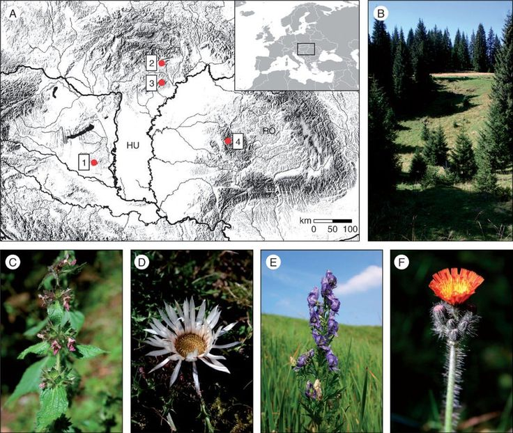 Dolines small to large-sized bowl-shaped depressions of karst surfaces may constitute important microrefugia for many vascular plants as thermal inversion maintains cooler conditions within them. Bátori et al. study the effects of macroclimate vegetation type and slope aspect on cool-adapted plants from a karst doline of the Bihor Mountains Romania.  (A) Location of the study sites in Hungary and Romania. 1 Mecsek Mountains; 2 Aggtelek Karst area; 3 Bükk Mountains; 4 Bihor Mountains. (B) A…