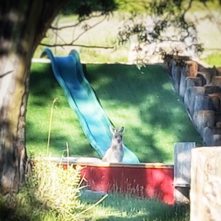 WHO want to play slippery slides?? Everybody is loving our new KIDS playground these days including our native FRIENDS!! . . . #LakeCrackenback #SnowyMountainsNSW  #FromWhereYoudRatherBe  #DestinationNSW #HolidayFun #HolidayHome #HolidayMood #ResortLife #Jindabyne #AdventureTravel #HighCountry #AdventureAwaits  #FreshAirAndFreedom #ExploringAustralia  #In2Nature #LoveJindy #CrackenbackLoving #Crackenback #SummerintheSnowies #SnowiesinSummer #ForTheLoveOfJindabyne #DestinationJindabyne…