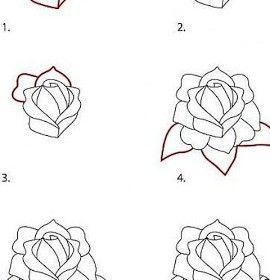 Comment Dessiner Rose Dessin Pinterest Comment Et Roses