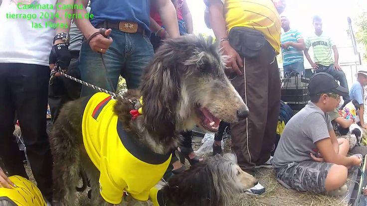 Caminata Canina Feria de Flores 2014, Tierragro