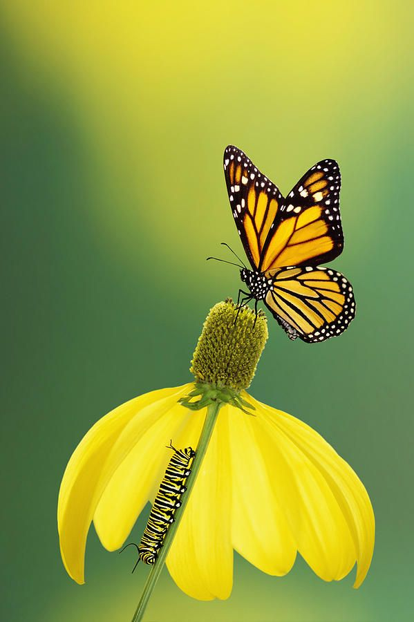 ~~Caterpillar To Butterfly by Thomas Kitchin Victoria Hurst~~