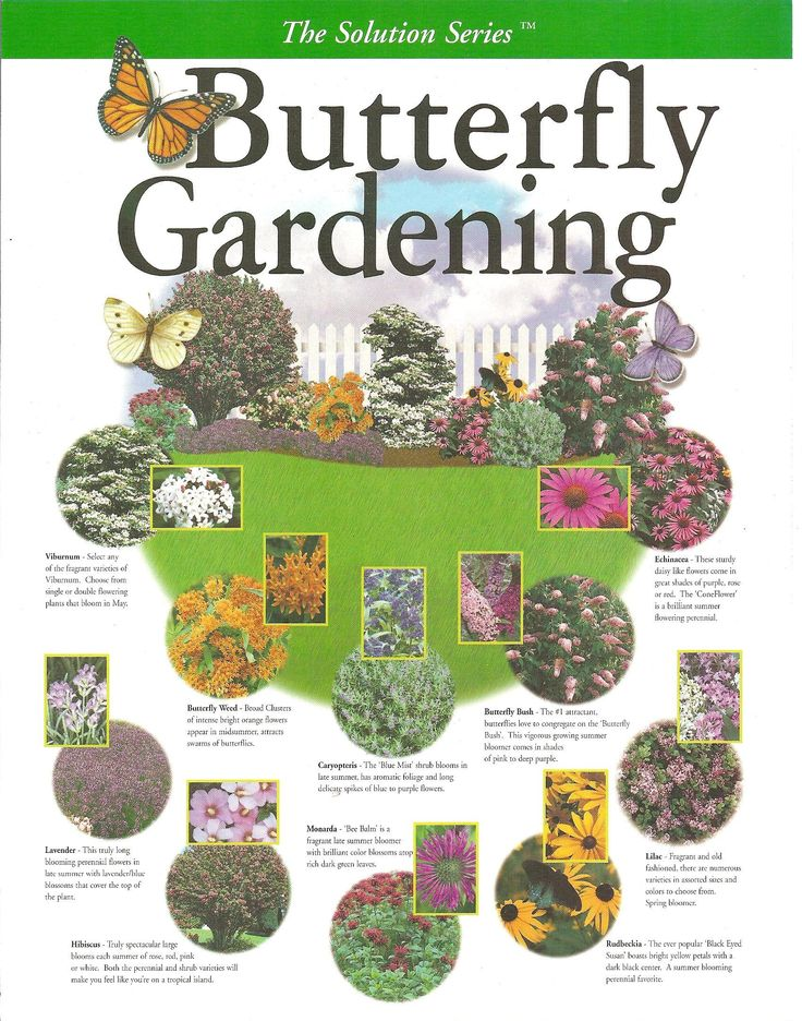 Butterfly Gardening Plan; Create your own Garden with this key map filled with the right plant combinations