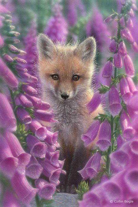 Wildlife Paintings, Wildlife Art Prints by Artist Collin Bogle