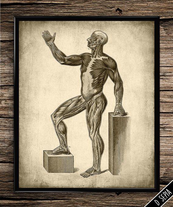 25 Best Vintage Medical Anatomy Images On Pinterest