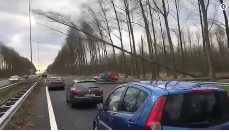 Heftige beelden van de storm vandaag - Mensen vliegen letterlijk door de lucht, bomen vallen om