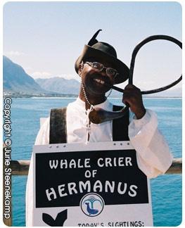 Whale crier in Hermanus.