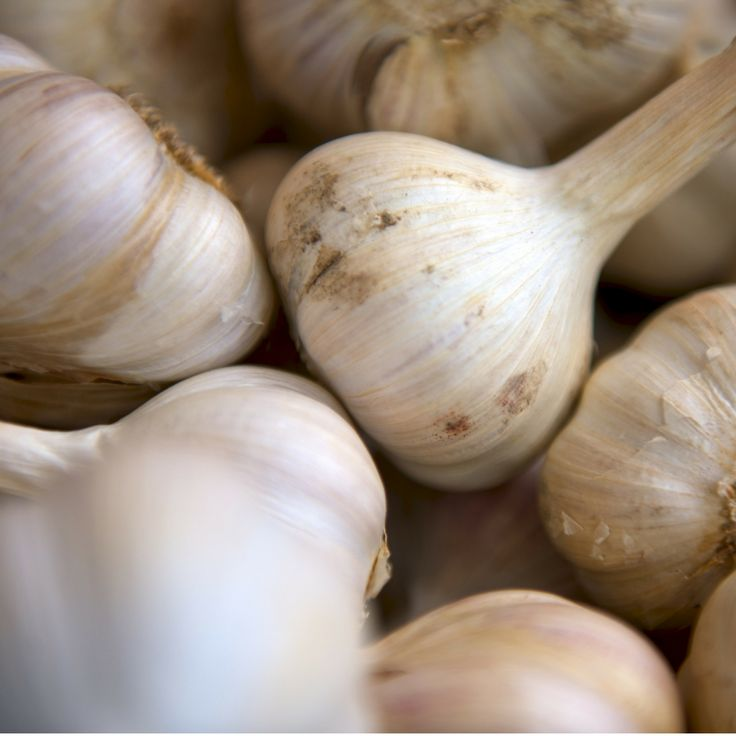 Lo sapevate che l'aglio è noto da secoli come rimedio naturale contro l'impotenza o comunque come stimolante della virilità? Nel Medioevo era ritenuto come un afrodisiaco naturale,per questa ragione era proibito nei monasteri! ⛪