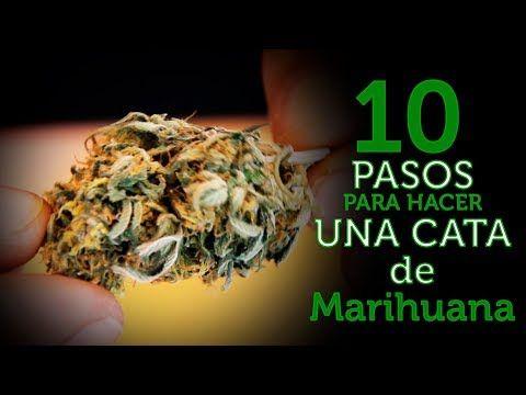 10 PASOS PARA HACER la mejor CATA PROFESIONAL y fumar COGOLLOS de MARIHUANA. Cultivo Paso a Paso 28
