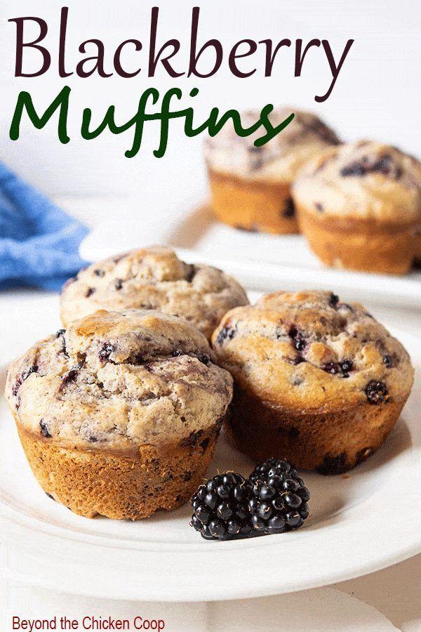 Blackberry Muffins Recipe Blackberry Muffin Blackberry Muffin Recipe Savory Muffins Recipes