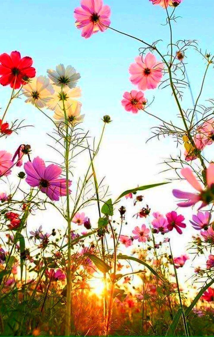 Legen Sie sich hin und blicken Sie in meinen herrlichen Garten und seufzen Sie eine Biene in den nach Honig duftenden … #biene #blicken #garten #her…