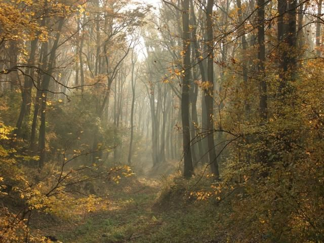 GEMENC-FOREST, HUNGARY