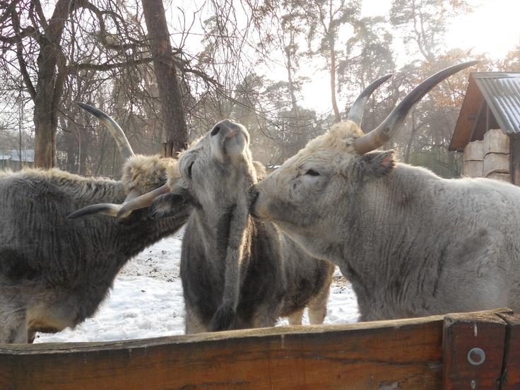 Zoo - Love among animals Állati szeretet (Debrecen,állatkert)