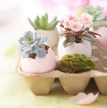 plant egg
