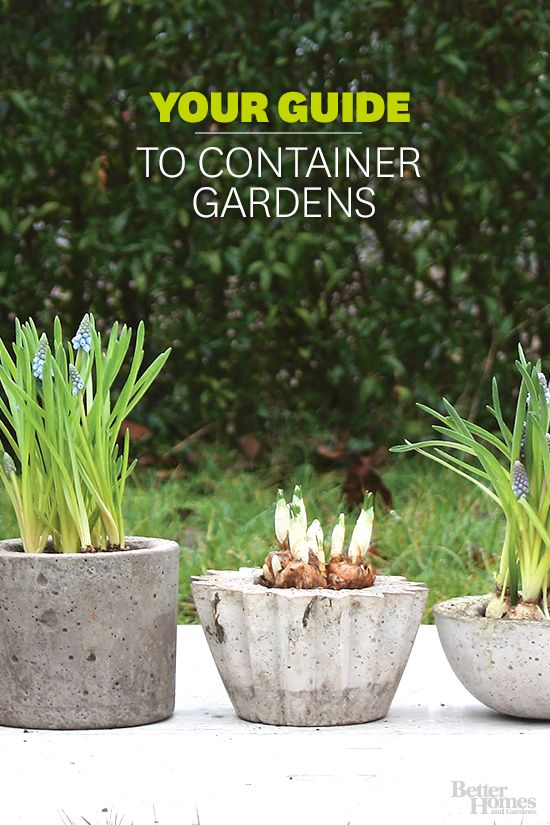 Grow your favorite plants in a stylish container. For all of our container garden ideas: http://www.bhg.com/gardening/container/?socsrc=bhgpin111313containergardens