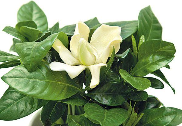 Čaj z tejto bylinky vás prekvapí: Tento zázrak vám zotaví črevá a zbaví bolestí žalúdka! | Feminity.sk