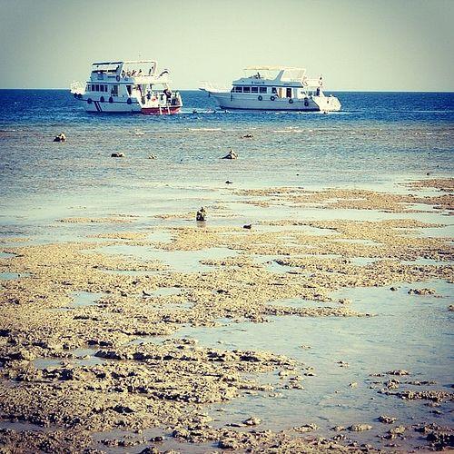 Red Sea, Egypt | Flickr – Condivisione di foto!