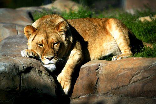 National Zoo & Aquarium, 999 Lady Denman Dr, Weston Creek ACT