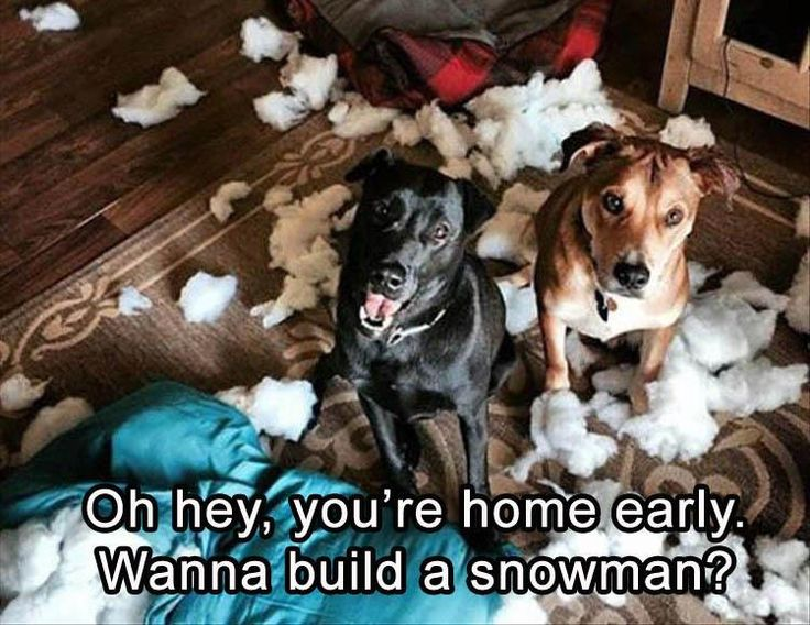Funny Christmas Memes For Friends : 18 best funny jokes images on pinterest ha ha funny stuff and
