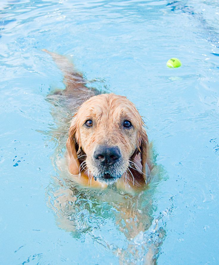 1000 Ideas About Dog Swimming Pools On Pinterest Dog Rooms Dog Beds And Cute Dog Stuff