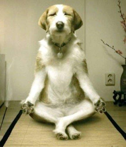 Yoga, funny dogs