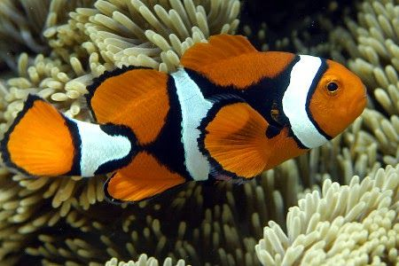 Indonesia Surga Ikan Hias Tropis