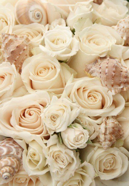 Roses and Embellished Shells <3: Sea Shells, White Roses, Wedding Ideas, Color, Beautiful, Seashells, Flowers, Beach Wedding, Cream