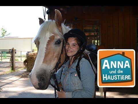 Pferd Information Fur Kinder Anna Und Die Haustiere Youtube In 2020 Haustiere Tiere Hund Pferd