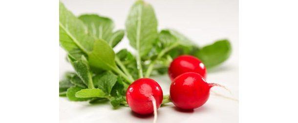 Comment et quand planter le radis ?   Planter des radis ...