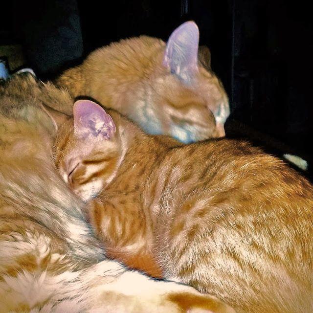 Inspiration: Kissat valtaavat makkarinkin