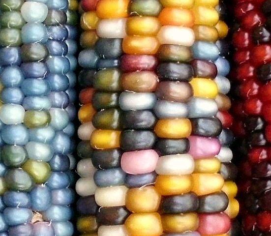 Auténtico cristal gema maíz magnífico 25 semillas por SmartSeeds
