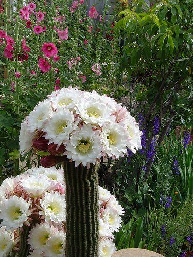 Arte y jardiner a dise o de jardines cactus el desierto for Jardines con cactus