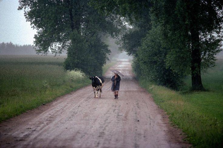 Wieś mazowiecka, 1989, Polska. Foto © Chris Niedenthal