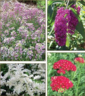 Deer Resistant Plants List from English Gardens