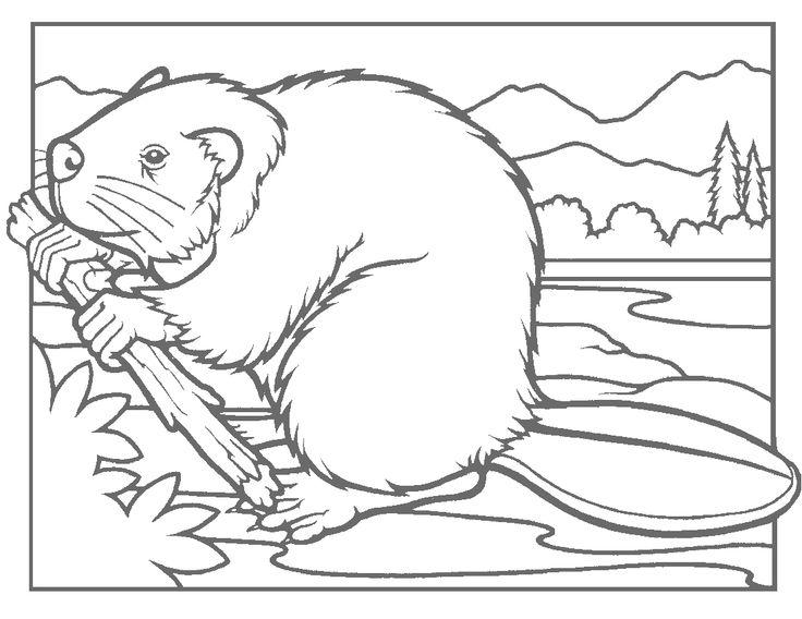 11 best Ausmalbilder biber images on Pinterest | Beavers, Colouring ...