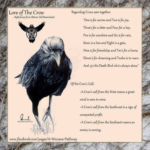 Crows Ravens: #Crow Lore. - Pinned by The Mystic's Emporium on Etsy
