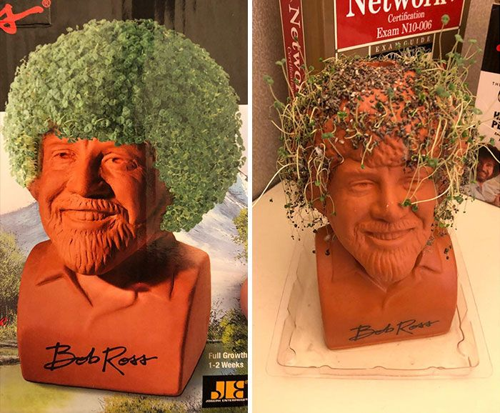 I Bought This Bob Ross Chia Pet These Are Not Happy Trees Expectation Vs Reality Chia Pet Bob Ross