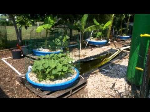 177 best images about my pet ducks on pinterest for Aquaponics pond
