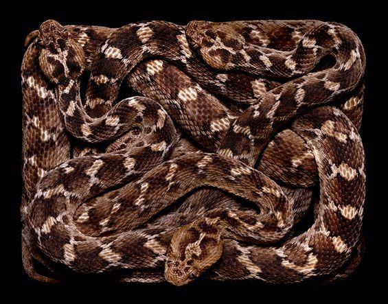 Serpentes e mais serpentes