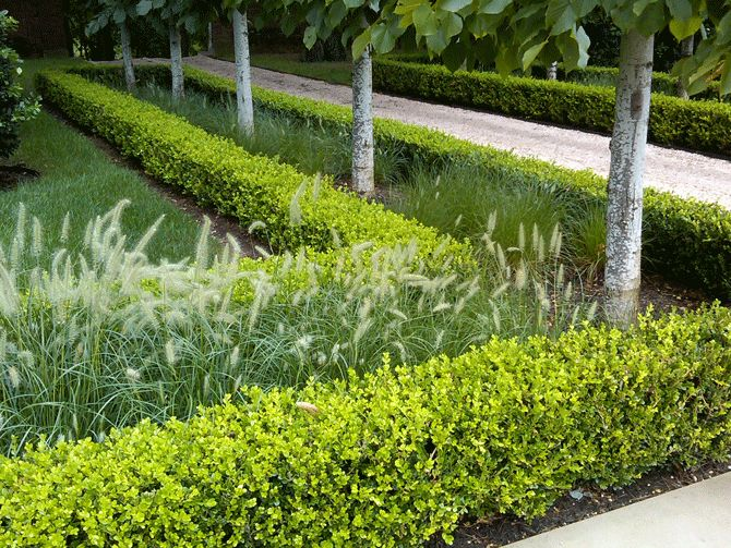 74 best Hedging Topiary Espalier images on Pinterest Formal
