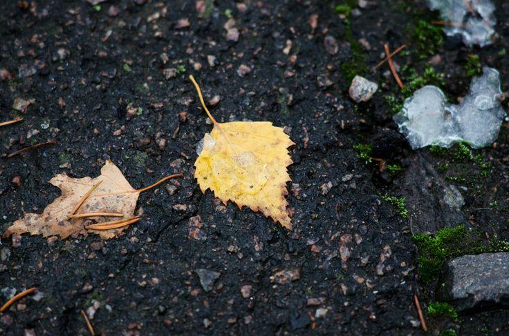 Late Autumn by Denys Tsutsayev on 500px
