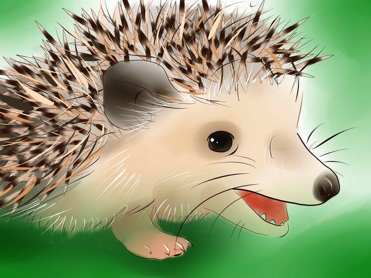 How to Buy a Hedgehog -- via wikiHow.com