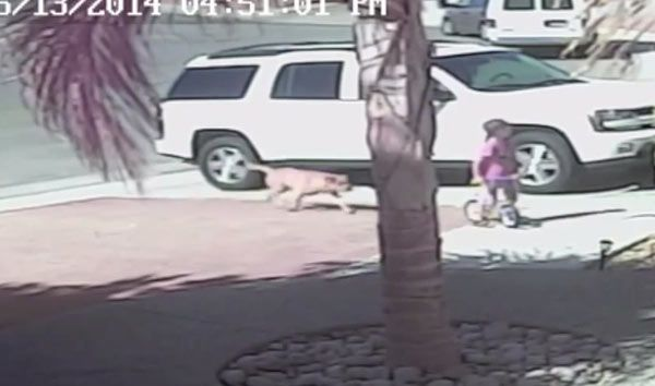 Boy, 4, Saved By Family Cat During Vicious Dog Attack %u2014�Video