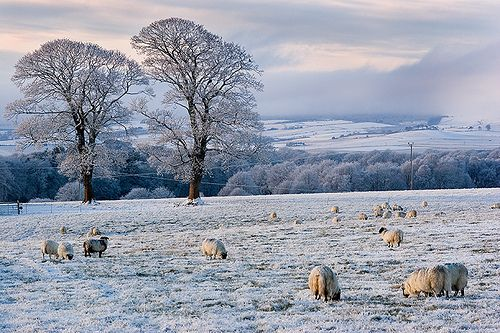 The countryside in Winter.