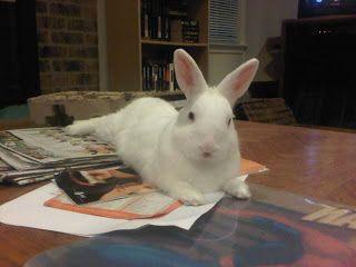 Rabbit Ramblings: Rainbow Bridge * Rabbit Rescue Poem * Easter Bunny Poem