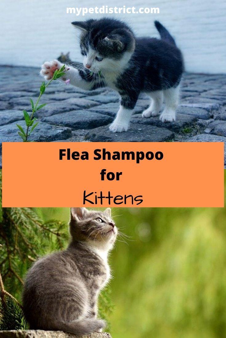 4 Best Flea Shampoos For Cats In 2019 Get Rid Of Fleas Fast In 2020 Cat Fleas Treatment Cat Has Fleas Cat Fleas