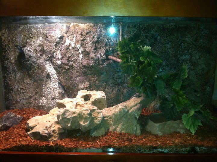 bild aquarium anzeigen wallpapers - photo #8