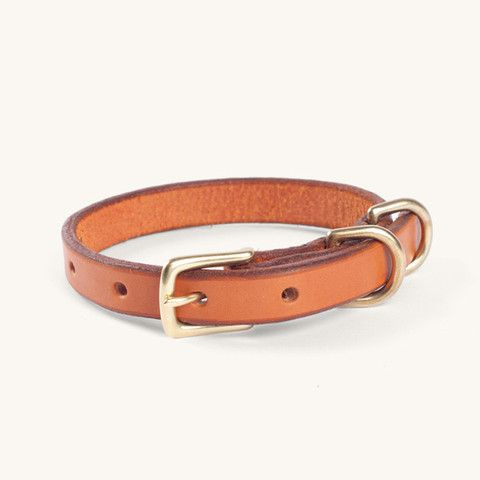 Narrow Canine Collar